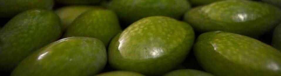 Olivesalamoia-e1508354869581